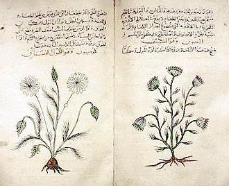 Cumin and dill - Arabic translation of DMM